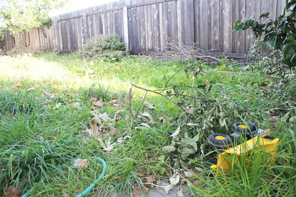 back yard grass