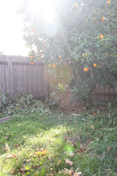 http://alwaysexpectmoore.com/wp-content/uploads/2016/02/orange-tree-400x600.jpg